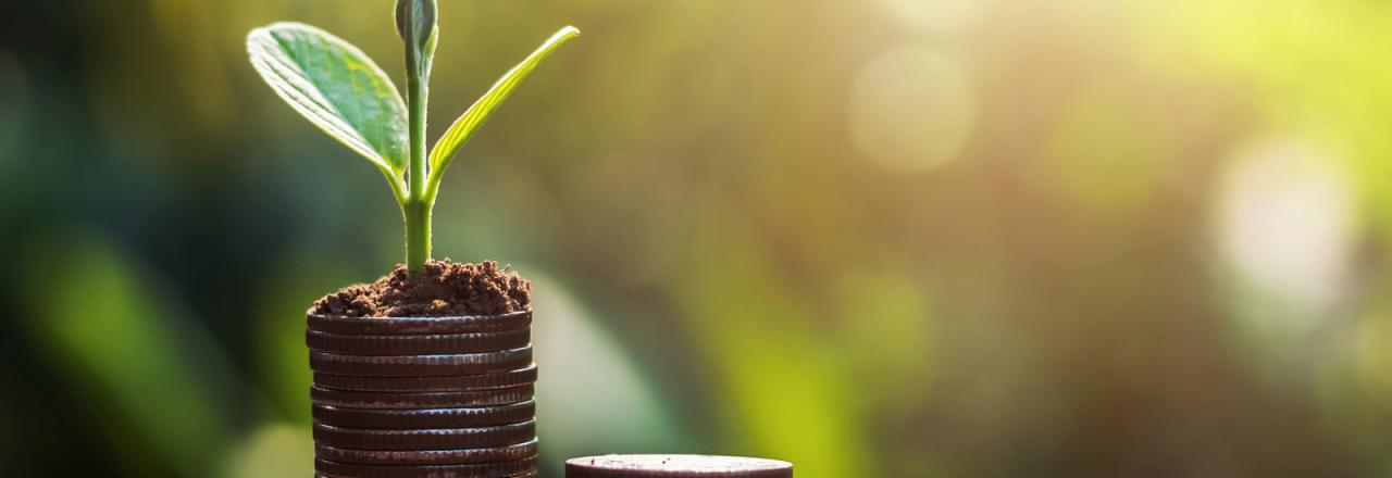 Stacks of coins with plants growing from them